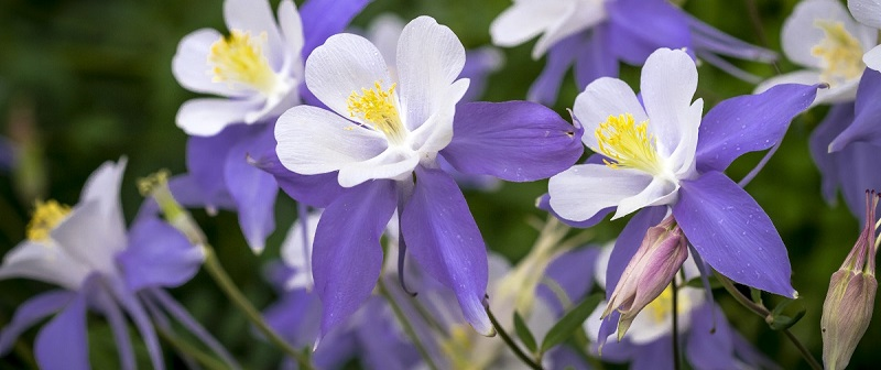 Grow These Plants In Your Colorado Backyard