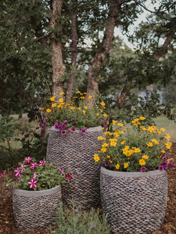 colorado-landscaping-plant-care-guide